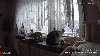 lupusnet-le-201-terst-gegenlicht