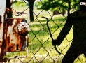 Einbruchschutz in Kleingärten