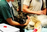 Einbrüche in Tierarztpraxen häufen sich